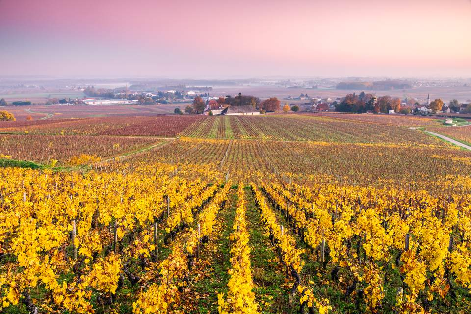 The beautiful vineyards of Burgundy, France